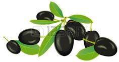 olive branch: Olives with leaves on a white background, vector Illustration