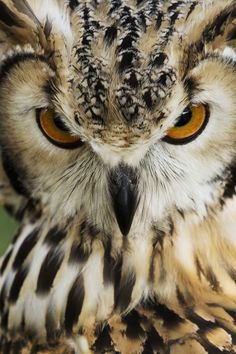 Laila | Bubo Bengalensis, Indian Eagle Owl | by Massimo Mannocchi