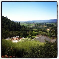 The view while dining at Auberge du Soleil ~ Napa Valley