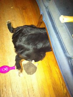 When it just HAS to be the toy stuck under the couch...