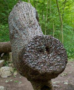 Денежные деревья в Шотландии. / Болталка / Разговоры на любые темы
