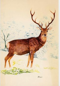 Christmas Greeting Cards, Christmas Greetings, Vintage Christmas, Christmas Crafts, Color Pencil Art, Some Cards, Elk, Colored Pencils, Moose Art