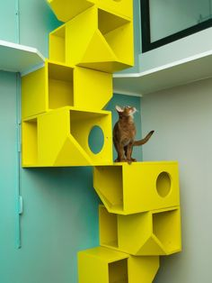 9 of the Craziest Cat-Climbing Structures in the World - Rachel Parsons - 9 of the Craziest Cat-Climbing Structures in the World 9 of the Craziest Cat-Climbing Structures in the Worldwomansday - Cat Climbing Wall, Deco Cafe, Cat Hotel, Animal Gato, Cat Towers, Cat Hammock, Cat Playground, Cat Shelves, Cat Enclosure