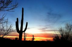 Saguaro in the sunset; Picacho Peak State Park (pinned by haw-creek.com)