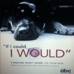Please help pet over population! Spay or neuter your pets! (PETA)