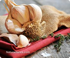 Treat and prevent high blood pressure naturally with garlic @ http://www.naturalnews.com/042686_garlic_hypertension_food_cures.html