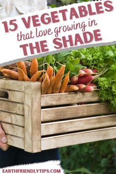 If you think you can't have a garden in your yard because you have shady spots, think again! Thanks to these 15 vegetables that grow in shade, you can have a garden no matter how much or how little sun your yard gets. These shade-loving vegetable plants don't need a lot of sunlight to survive, so they're perfect for the less sunny parts of your yard. Check out these 15 vegetables that grow in the shade so you can start planting today! garden|gardening|vegetables that grow in shade|shade plants Planting Vegetables, Growing Vegetables, Shade Tolerant Plants, Shade Plants, Eco Garden, Green Living Tips, Bush Beans, Natural Parenting, Grow Your Own Food