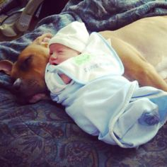 Don't Jude  a pit bull by there name what if we said o your last name is hornandez  how would you feel pit bulls are my favorite breed look how good they are with babies and kids don't hide a book bye it's cover because if pit bulls have to leave I won't know what to do pits are my life so please do not Jude them and stop breeding them to fight.