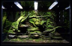 custom stream bed paludarium by biovivara