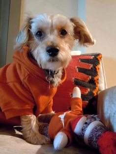 Don't hate me because I'm beautiful! #hookem #ut #puppy