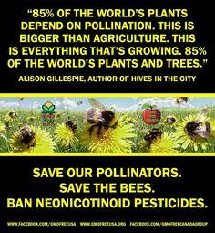 neonicotinoid is the problem… Eat only organic food… Save the bees, Save th… .neonicotinoid is the problem… Eat only organic food… Save the bees, Save [. Save Our Earth, Save The Planet, Organic Gardening, Gardening Tips, Save The Bees, Environmental Issues, Bee Happy, Bees Knees, Organic Vegetables