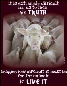 http://www.pawsforthenews.tv/1news/1featured-news/mark-devries-exposes-factory-farms-using-a-drone-at-smithfield-foods-who-is-guilty-of-terrible-animal-abuse-and-making-local-kids-ill/ Please follow the link above so you understand about Pig Factory Farming Paws for the News www.pawsforthenews.tv