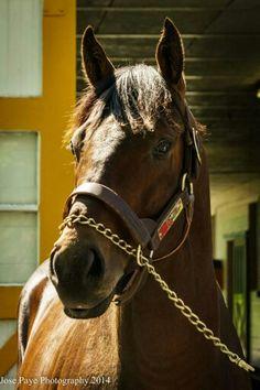 2013 Kentucky Derby winner ORB is a stallion at Claiborne Farm — at Claiborne  Farm 97eae9b351f2