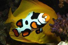 61858091_1-Mayoreo-Peces-Marinos-Invertebrados-y-Corales-Santa ...