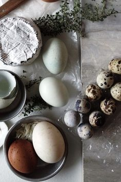 ∷ Variations on a Theme ∷ Collection of eggs  (Nikole Herriot)