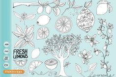 Check out Lemon Line Art & PS Brushes by FishScraps on Creative Market
