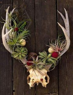 Best Amazing Air Plant Display Ideas 22 - All For Herbs And Plants Succulent Display, Air Plant Display, Plant Decor, Display Wall, Succulent Wall, Succulent Planters, Plant Art, Hanging Plants, Indoor Plants
