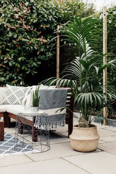 Palm in seagrass basket on patio#smallgarden #gardenideas