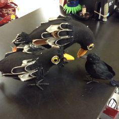 Assorted plush crows. Some with zippers. Some don't need them.