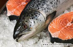 Можно ли есть ГМО-лосося?.