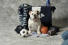 Two is Better Than One: Georgetown's Jack the Bulldog Gets an Adorable Apprentice