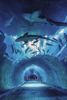 7 Things to do in Dubai - The Dubai Mall Aquarium Tunnel
