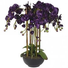 164 gbp Violet Orchid Phalaenopsis Large Plants in Black Ceramic Bowl - Accessories from Breeze Furniture UK