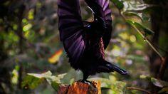 birds of paradise - Google keresés
