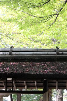 #spring, #cherry blossoms, #petal, #leaf, #gate,