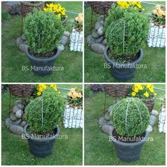 How to trim decorative shrubs by giving them special shapes – Practical ideas Boxwood Landscaping, Boxwood Garden, Topiary Garden, Boxwood Topiary, Topiary Trees, Front Yard Landscaping, Outdoor Topiary, Boxwood Hedge, Camping Accessories