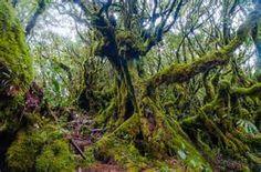 jungle highlands - Bing images