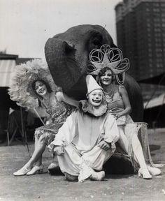 Circus #elephant