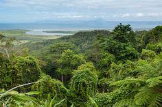 La Rain Forest - forêt primaire dense et sombre - Australie