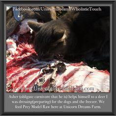 Prey Model Raw  Felines. The obligate carnivore.  Here, we are ALL about species appropriate nutrition.   Facebook.com/unicorndreamswholistictouch  UnicornDreamsFarm.com