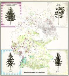 Deutschlandkarte: Nadelbäume | ZEIT ONLINE