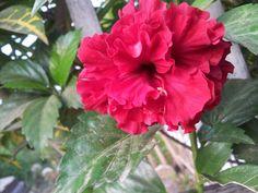 Flowers 3 #nature #gardening