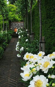 Walkway bordered with peonies - ▇  #Home  #Landscape #Design via Christina Khandan, Irvine California ༺ ℭƘ ༻ IrvineHomeBlog