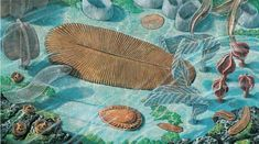 Precambrian Sea Floor