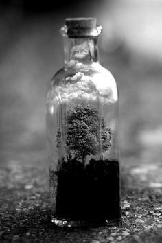 Fantasy | Magic | Fairytale | Surreal | Myths | Legends | Stories | Dreams | Adventures | Tree in a Bottle