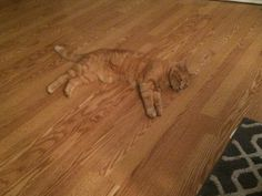 Image result for Camouflage cats What Cat, Here Kitty Kitty, Trending Memes, Camouflage, Funny Jokes, Cats, Animals, Image, Gatos