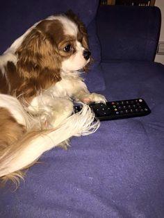 Můj Pejsek Charlie/My Dog Charlie