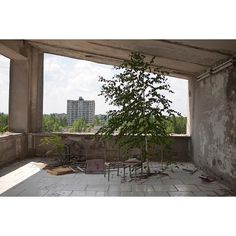 "A tree grows under a roof in the abandoned city of Pripyat in the Chernobyl Exclusion Zone. When founded in 1970 Pripyat was hailed as a model city built to serve the nearby nuclear power plant. The ""peaceful atom"" as civil use of nuclear power was widely known at the time was to bring prosperity to the city. Instead the accident at the Chernobyl Nuclear Power Plant on 26 April 1986 destined Pripyat to become perhaps the shortest-lived city in history. The city was evacuated the day after…"