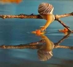 reflective snail