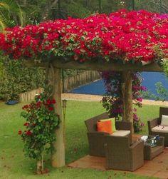 Bugandill to    Garden decor ideas  #bugandill #decor #garden #ideas