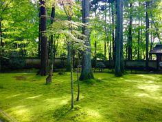 京都大原三千院苔寺