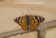Diario De Un Zocato. : Mariposa Moth, Animals, Books To Read, Insects, Diary Book, Animais, Animales, Animaux, Animal
