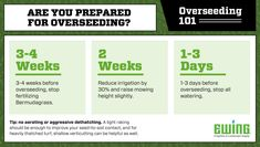 Overseeding season is upon us! What stage of the process are you in? Lawn Turf, Irrigation, Stage, Tips, Advice, Scene, Hacks