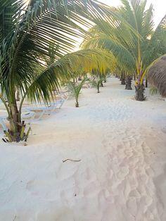 Mini palmeras