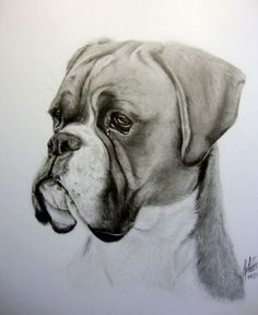 """11x14"""" pencil, custom dog portrait FOLLOW ME ON FACEBOOK! www.facebook.com/WildlifeAndAr Another one for a Christmas present! Thanks for looking, I hope you enjoy!"""