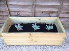 patio container veg grow your own potatoes cauliflower pots - lylia rose